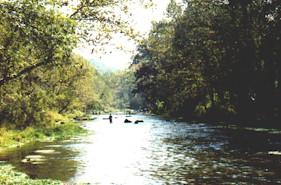 Bennett springs state park for Bennett springs trout fishing