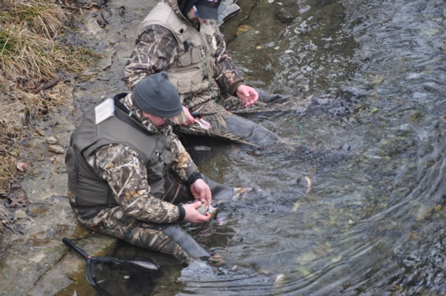Fishing times for Bennett springs trout fishing